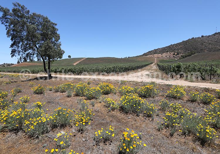 Vignobles du Chili, route des vins