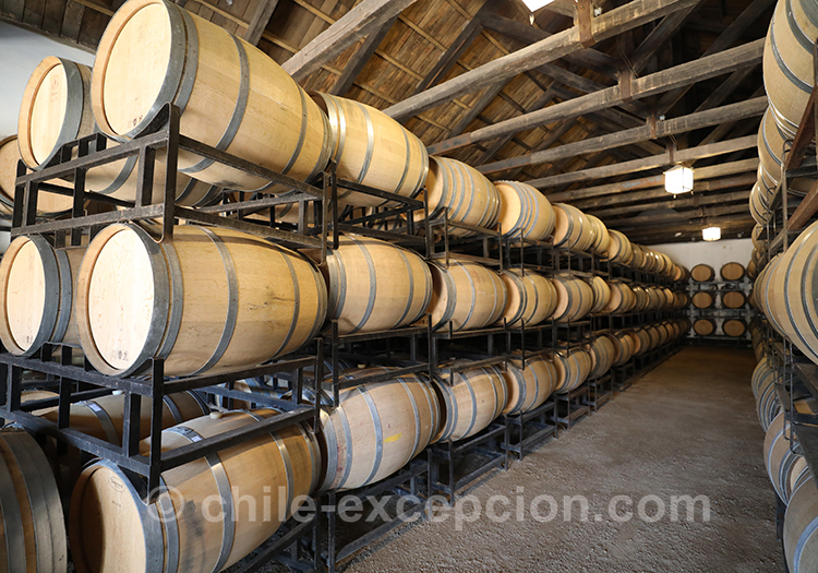 Fermentation de la récolte de 2020, Casa Bouchon, vallée del Maule, Chili