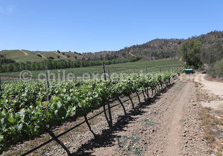 Les vignes du Chili et sa route du vin