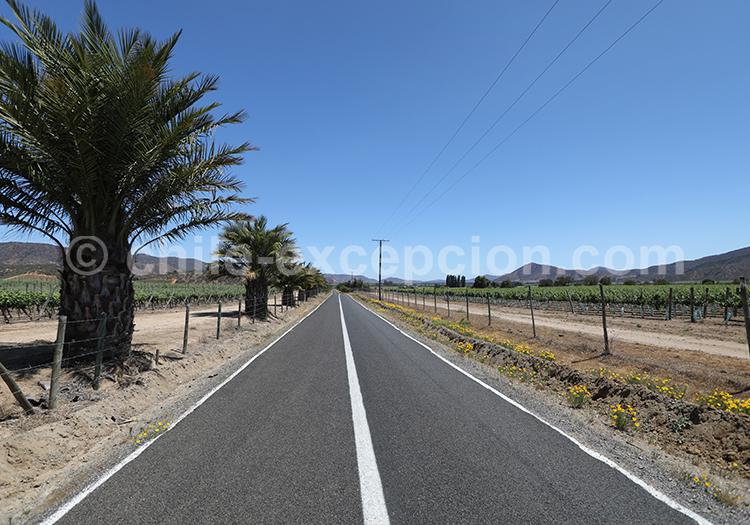 Faire la route des vins au Chili