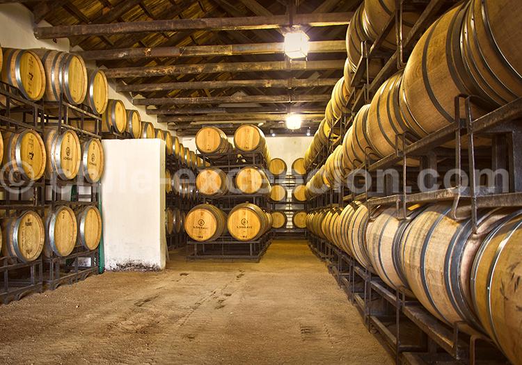 Salle des barriques, Viña Casa Bouchon, vallée del Maule, région centre du Chili