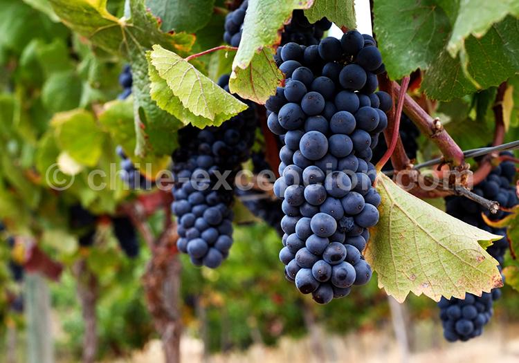 Viña Villard, sur la route du vin, Chili