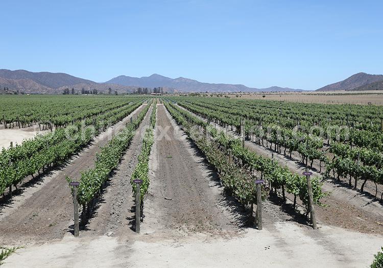 Vignes chiliennes, sur le circuit de la route des vins, Chili avec l'agence de voyage Excepción