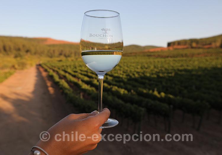 Belle robe du vin chilien à la viña Casa Bouchon, Chili