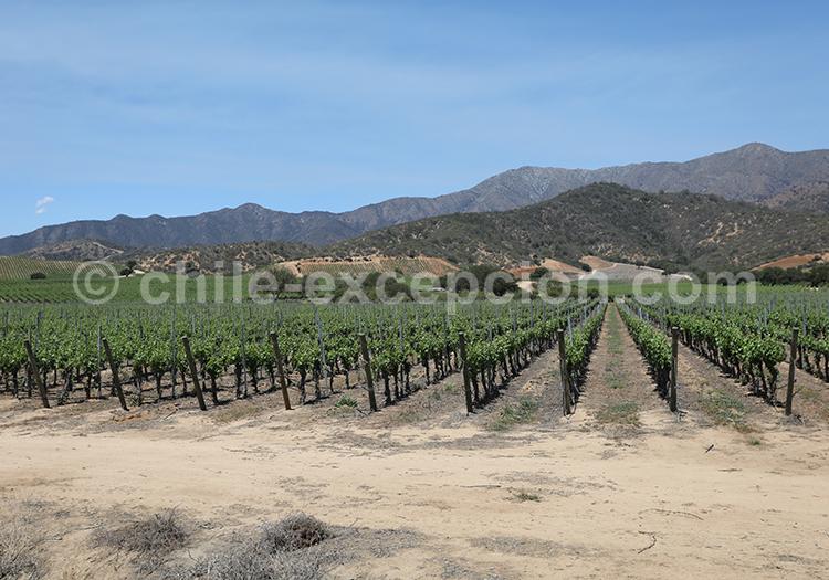 Visiter la route des vins au Chili