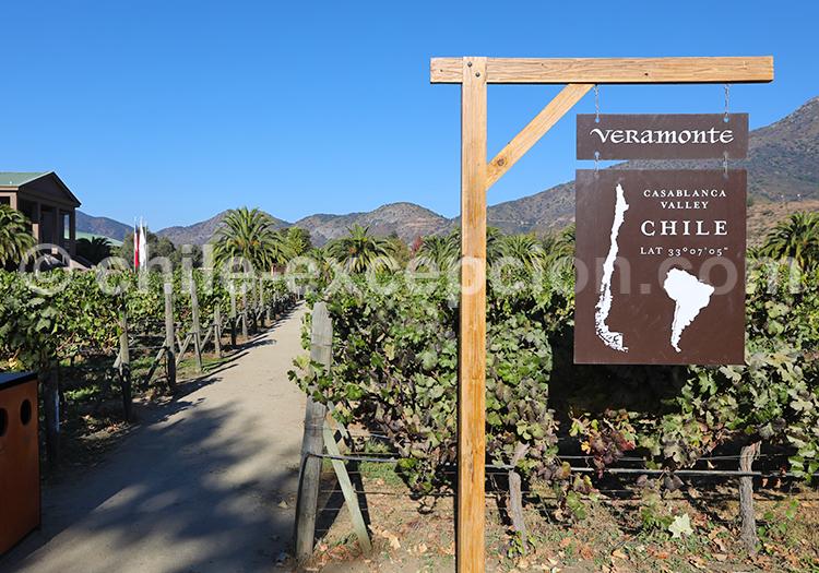 Viña Veramonte, vallée de Casablanca, Chili