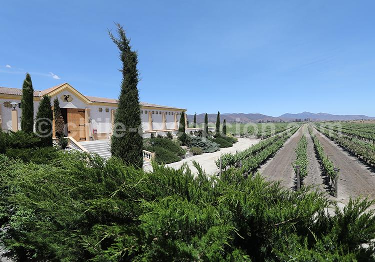 Viña El Cuadro, vallée Casablanca, région centre du Chili