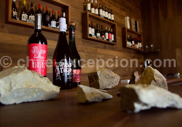 Viña Casa Bouchon, vallée del Maule, région centre du Chili