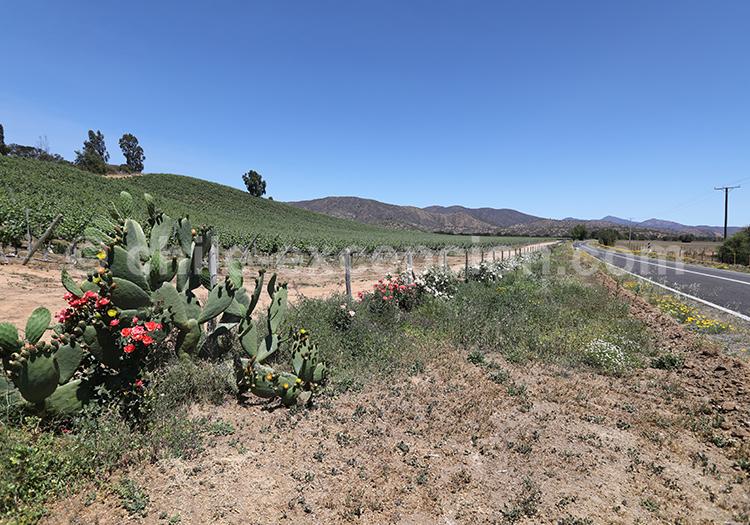 Le Chili et sa route des vins