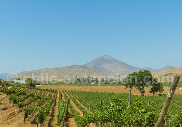 Viña Dalbosco, vallée de Limarí, Chili avec l'agence de voyage Chile Excepción