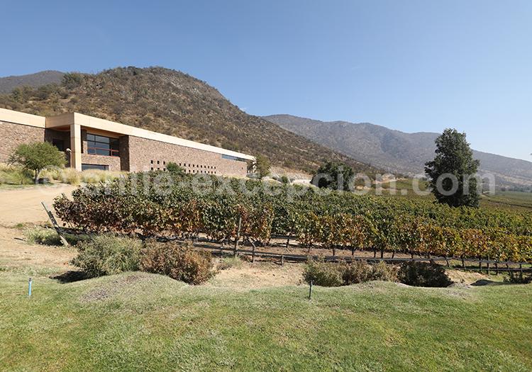 Viña San Pedro Cachapoal Andes, Chili avec l'agence de voyage Chile Excepción