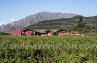 Viña Von Siebenthal, vignes de la vallée de l'Aconcagua au Chili