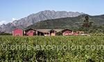 Viña Von Siebenthal, vallée Aconcagua, Chili