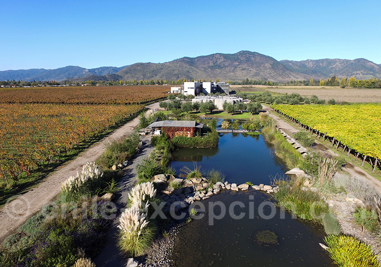 Viña Maquis, vallée Colchagua