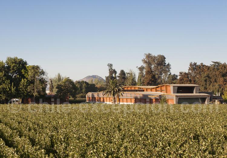 Viña Alma Viva, vallée de Maipo, Chili avec l'agence de voyage Chile Excepción