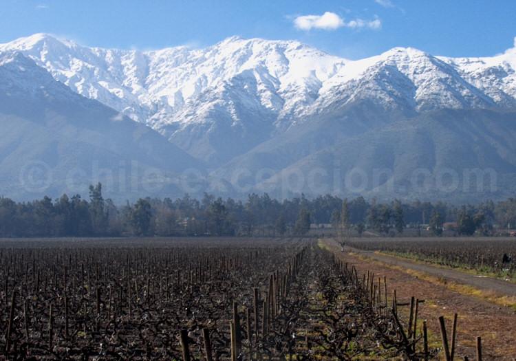 Viña Cousiño Macul, vallée del Maipo avec l'agence de voyage Chile Excepción