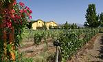 Viña Anakena, vallée du Calchapoal, Chili