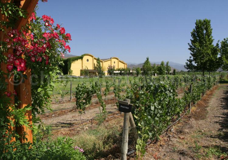 Viña Anakena, vallée du Calchapoal, Chili avec l'agence de voyage Chile Excepción