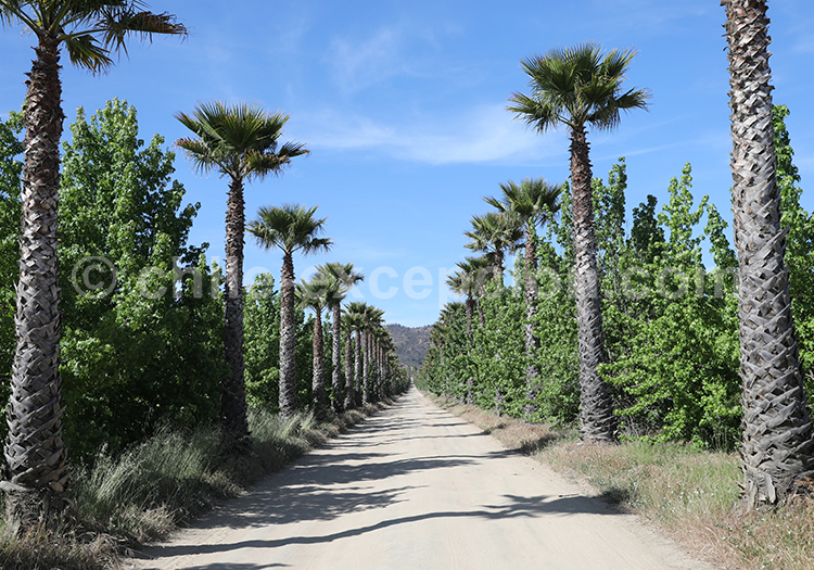 Viña Kingston, vallée Casablanca, région centre du Chili avec l