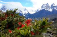 Flore dans le Paine