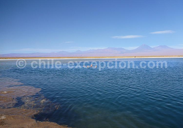 Lagune Cejar, Atacama