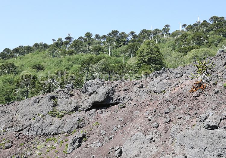 Visiter l'Araucanie, région du Chili, Sollipulli