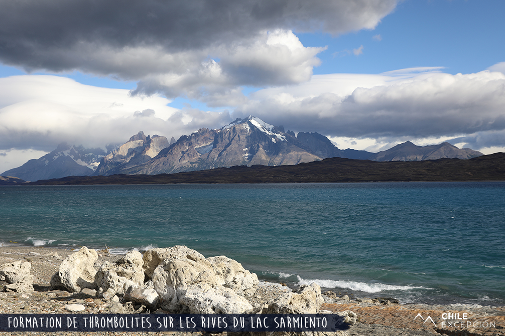 Formation de thrombolites sur les rives du lac Sarmiento, Patagonie australe, Chili
