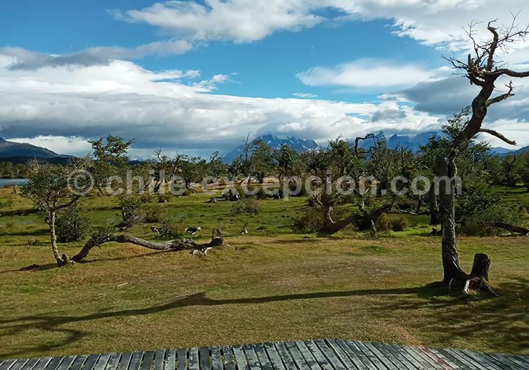 Découvrir le parc national Torres del Paine et l'Hôtel Pampa lodge avec l'agence de voyage Chile Excepción