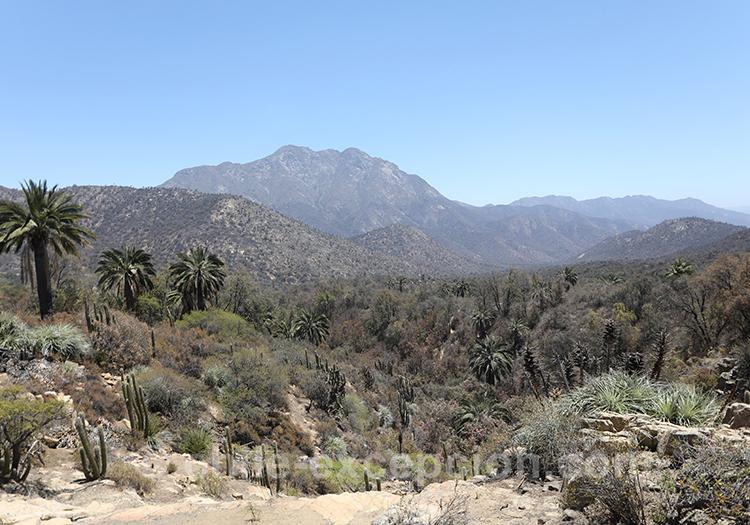 Que visiter dans la région centre du Chili : Le parc national La Campana