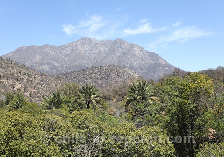 Découvrir le parc national La Campana, Chili