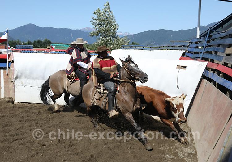 Voir du rodéo au Chili