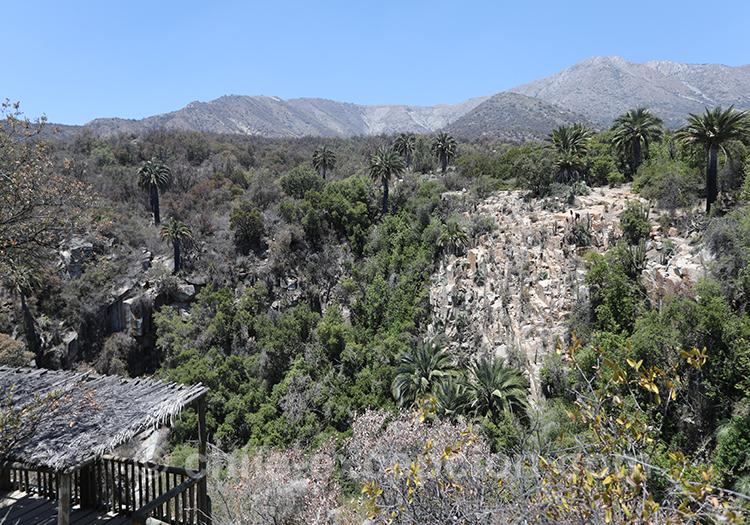 Comment se rentre au parc national La Campana, au Chili