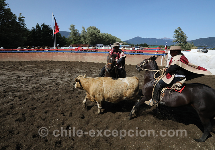 Rodéo au Chili