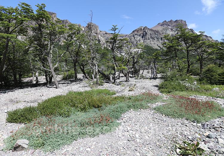 Découverte du parc national Cerro Castillo