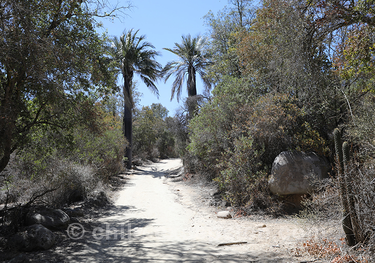 Que voir dans le parc national La Campana au Chili