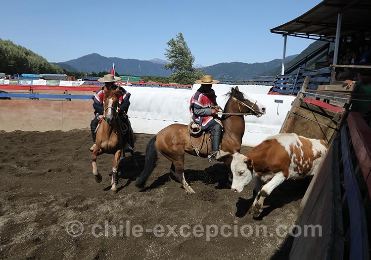 comment voir du dressage au Chili