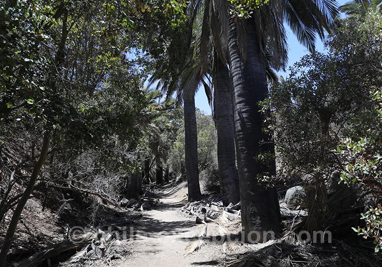 Comment visiter le parc national La Campana, Chili