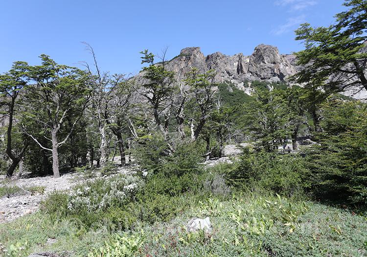 Que voir dans le parc national Cerro Castillo, Chili