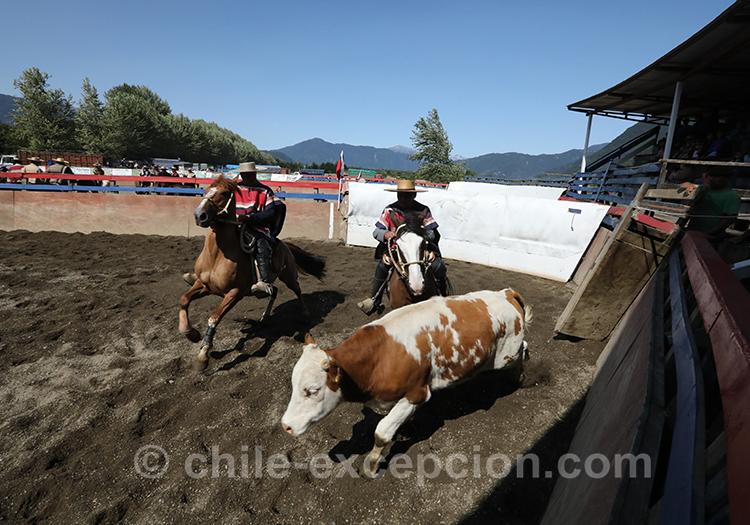 Dressage au Chili