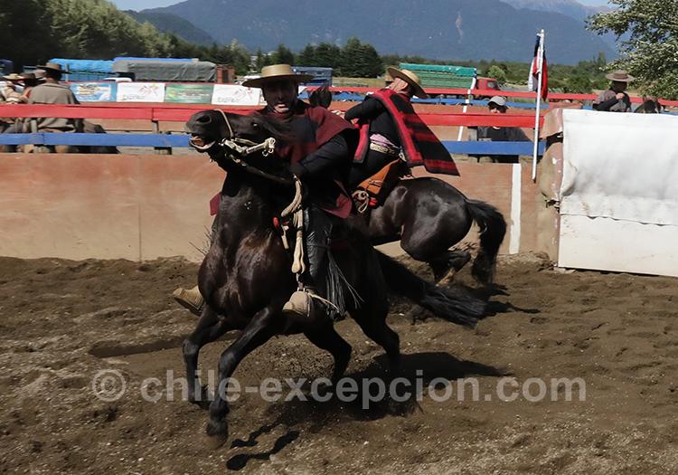 Spectacle de rodéo au Chili