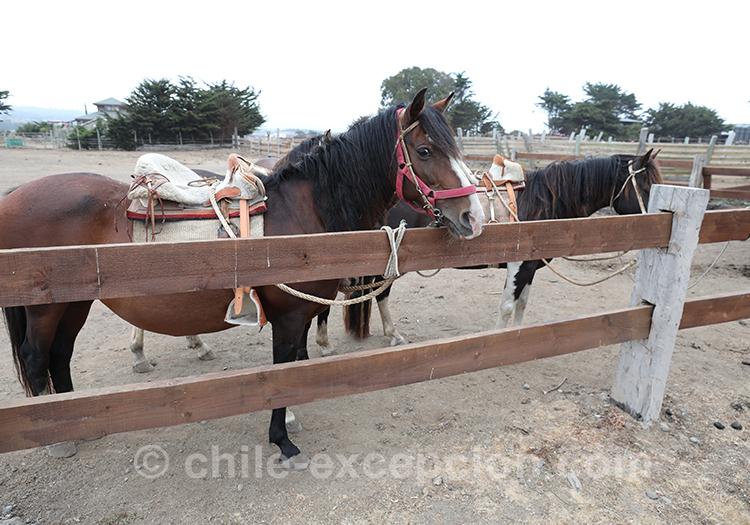 Faire une balade à cheval à Punta de Lobos, pichilemu, Chili avec l'agence de voyage Chile Excepción