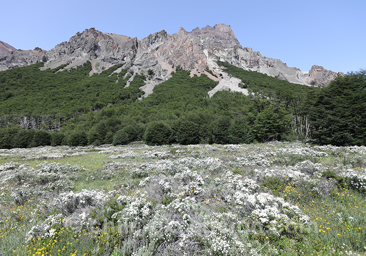 Que voir en Patagonie australe, le parc national Cerro Castillo