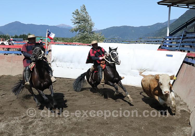 Concours de rodéo au Chili