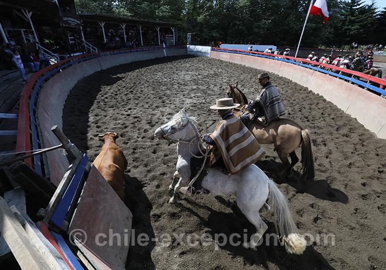 Culture du Chili et rodéo