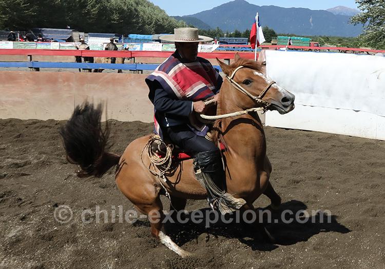 Huaso à cheval au Chili