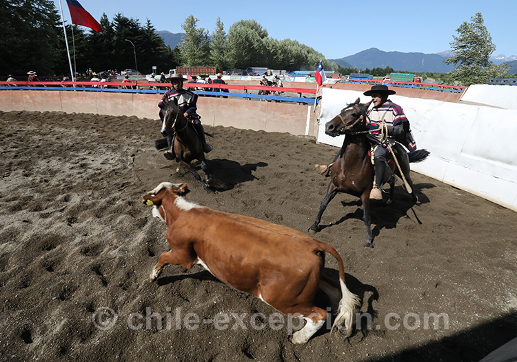 Que voir au Chili, le rodéo