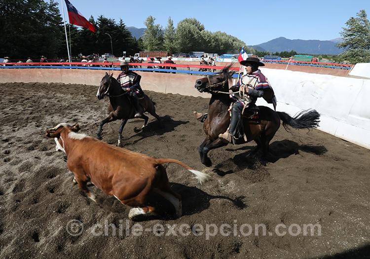Où voir un spectacle de rodéo au Chili