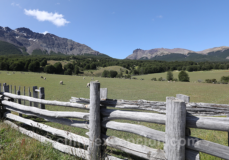 Prairie du parc national du Cerro Castillo en Patagonie australe
