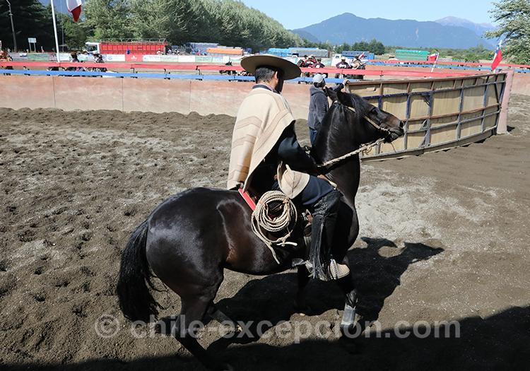 Huasos, l'homme de la steppe de Patagonie