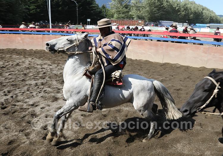 Huasos, l'homme de la steppe de Patagonie au Chili